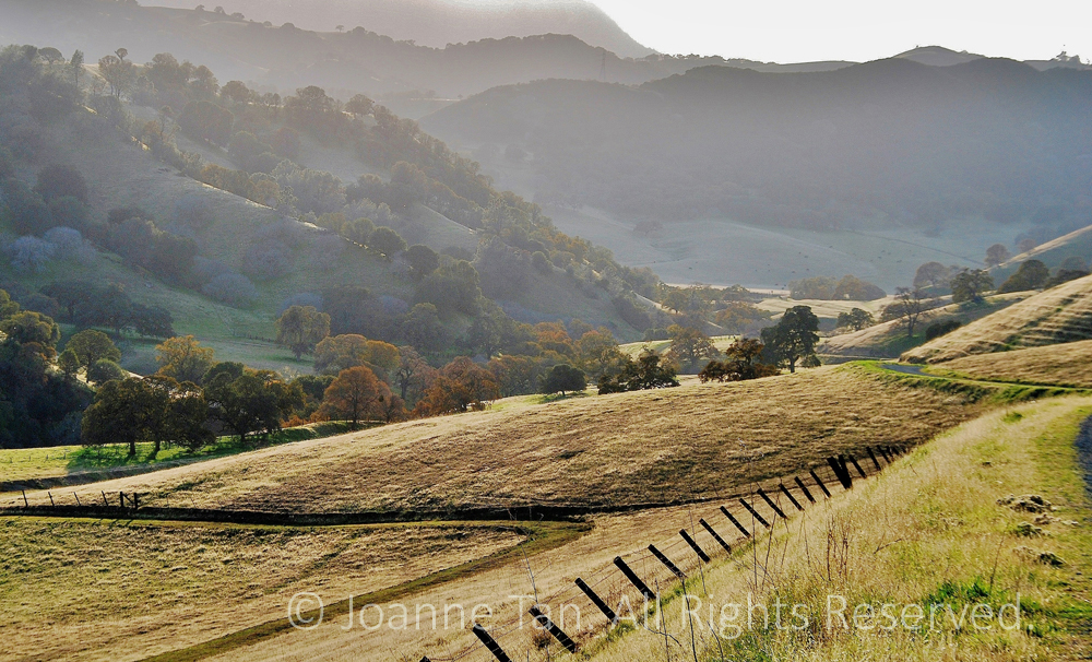 P-landscape- A Painting of California's Oak Valley (1)