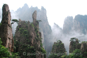 landscape-Yellow Mountain #2, Cliffs, Mist, & Pines. Huangshan, China