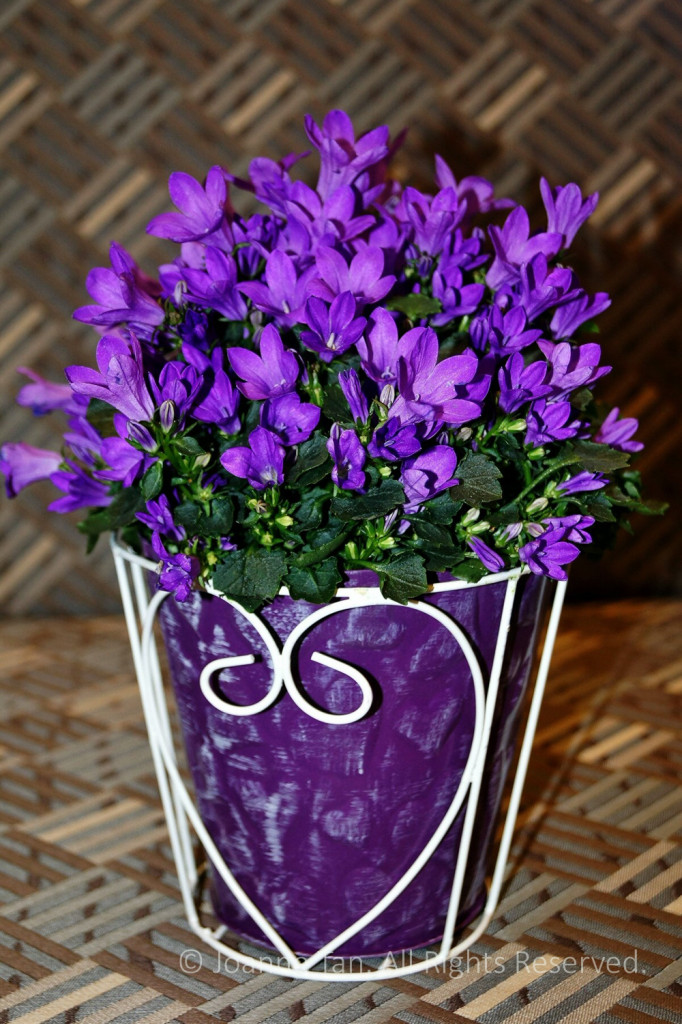 flowers – plants – Purple Little Flowers in a Heart Shaped Pot