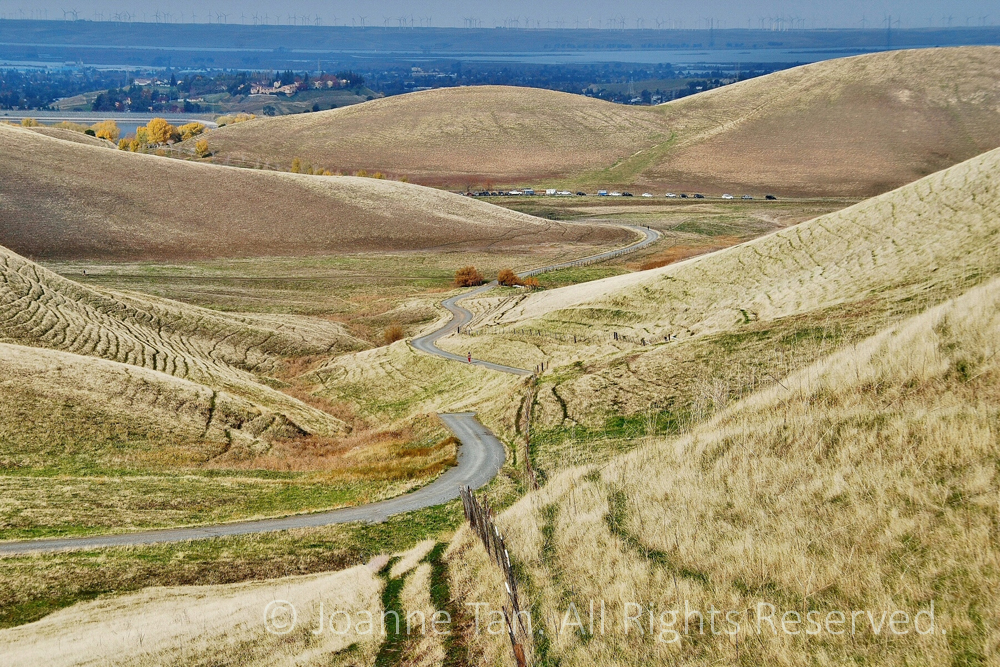 Meandering Down the Golden Hills to Wind Blades in Livermore, CA.  Blue & yellow are the colors of Contra Costa County in Mediterranean style summer, a winding path snakes down the intersecting gentle rounded hills, to the blue bay beyond which is the wall of wind turbines in Livermore, California.